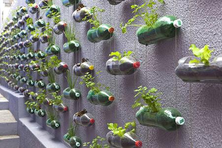 piante per arredo